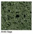 Arotic-Sage in Atlanta Georgia