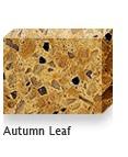 Autumn-Leaf in Atlanta Georgia