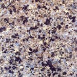 Crema Bahia Granite Countertops Atlanta