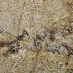 Exotic Golden Granite Countertops Atlanta
