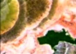 Verde Esmeraldo Granite Countertops